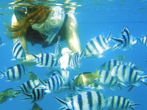 ボートシュノーケルで魚に餌やり